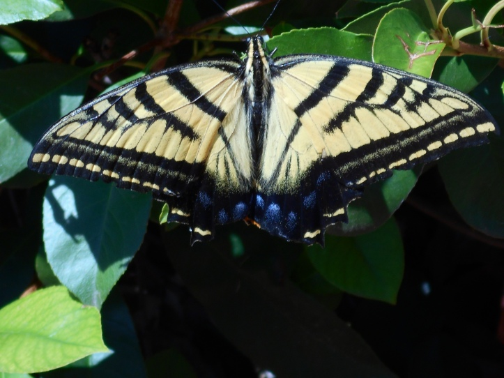 Butterfly totem transformation, Tara Greene astrology