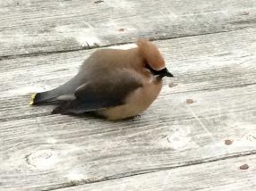 Helpless bird, Baby, Vulnerability, Tara Greene